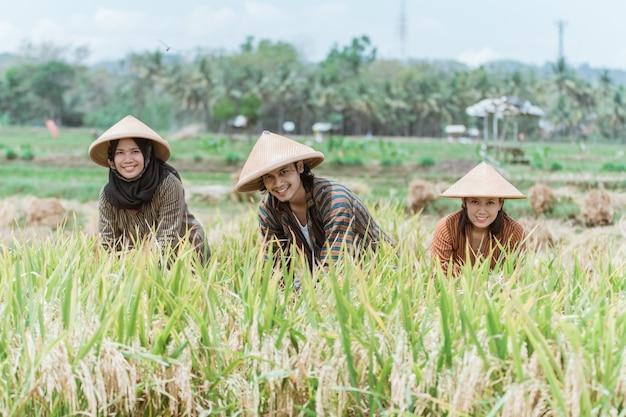 I contadini asiatici sorridono mentre si chinano per raccogliere le piante di riso giallo contro il campo di riso