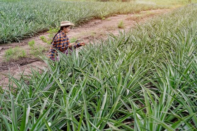 L'agricoltore asiatico vede la crescita dell'ananas nella fattoria e salva i dati sul tablet