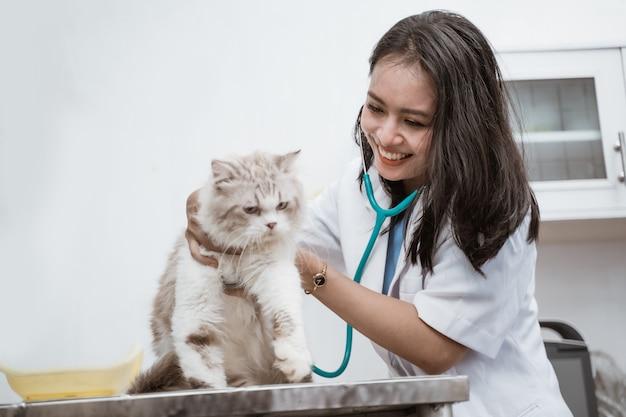 Veterinario femminile asiatico esaminando gatto con lo stetoscopio presso la stanza della clinica
