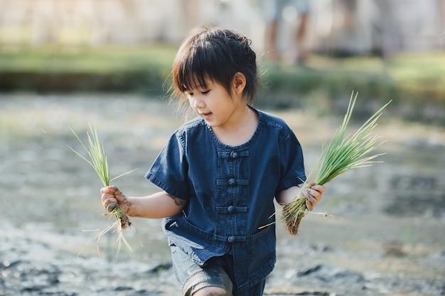 Bambino asiatico che pianta riso nel campo fangoso