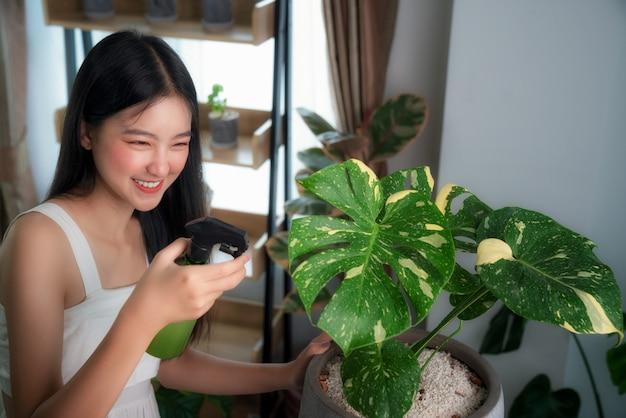 Signora asiatica che annaffia all'albero variegato di monstera con lo spray nella sua stanza nel suo condominio, questa immagine può essere utilizzata per hobby, relax, concetto di albero e arredamento