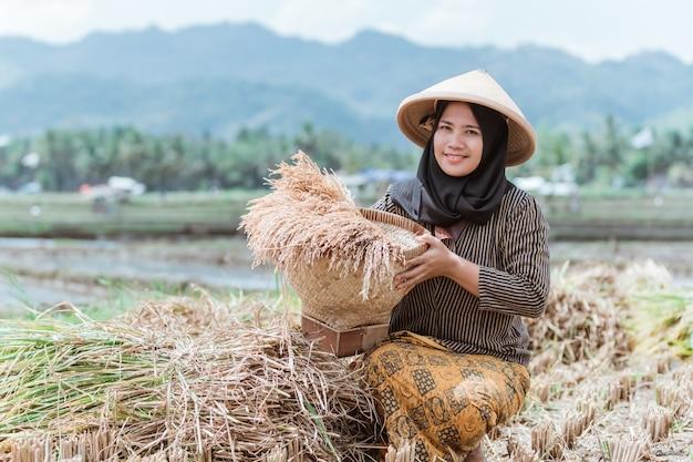 Le coltivatrici musulmane asiatiche allevano i raccolti di riso con cesti di bambù intrecciati nelle risaie