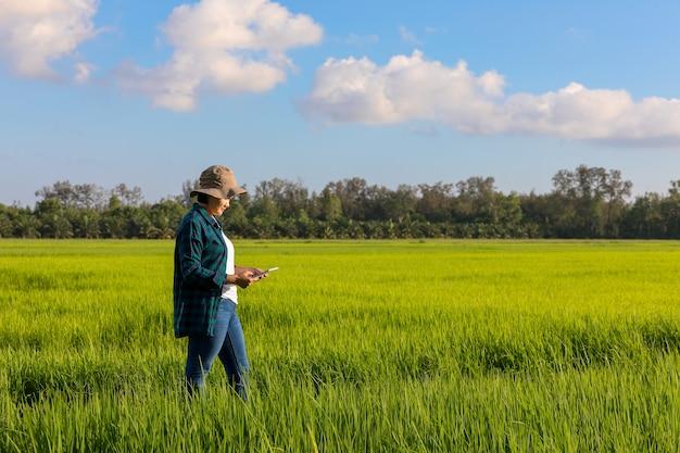 Camicia di plaid da portare della donna agricola asiatica in risaie
