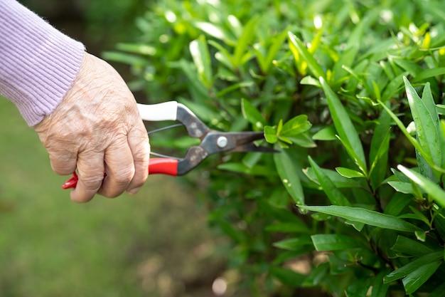 Donna anziana asiatica anziana o anziana tagliare i rami con cesoie da potatura per prendersi cura del giardino in casa, hobby per rilassarsi e fare esercizio con felice.