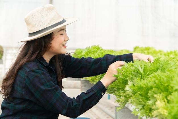 Coltivatore asiatico donna raccolta insalata di verdure fresche in fattoria sistema idroponico impianto nella serra