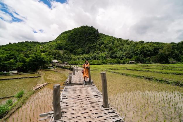 Donna asiatica in piedi su un ponte di legno con un giovane riso verde in crescita depositato attraverso un terreno impregnato d'acqua