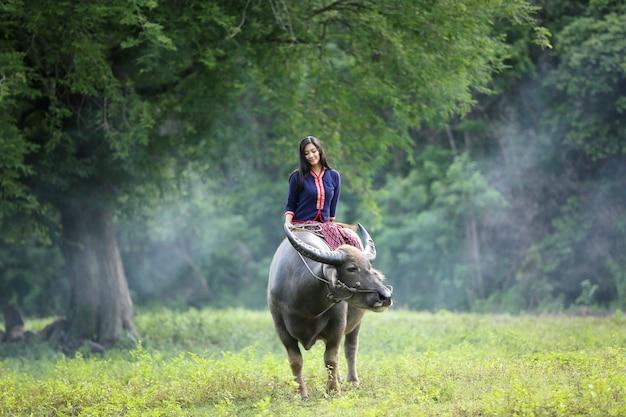 Coltivatore tailandese della donna asiatica che si siede su un bufalo nel campo