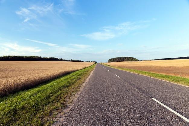 Strada asfaltata lungo il campo con erba verde e grano giallo maturo, paesaggio estivo con cielo blu