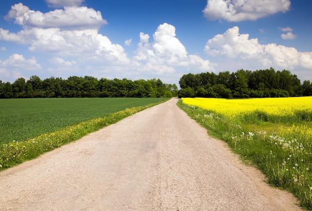 Strada non asfaltata che attraversa campi agricoli