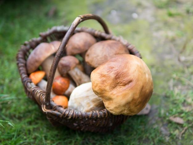 Funghi di foresta assortiti in cestino di legno lavorato a maglia