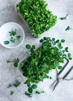 Assortimento di micro verdi sulla tavola di legno. uno stile di vita sano