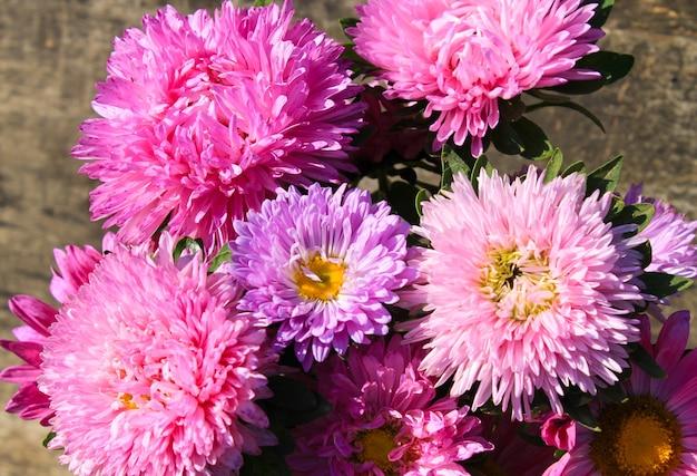 Sfondo di fiori di aster