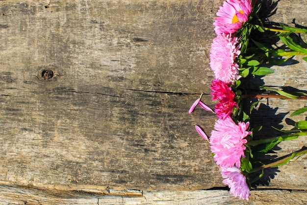 Fiori di aster sullo sfondo di legno