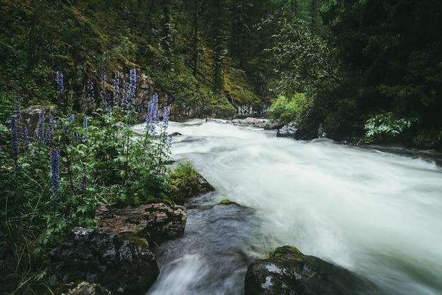 Paesaggio forestale atmosferico con rapide sul potente fiume di montagna tra rocce con muschi, alberi e vegetazione selvaggia. fiori viola vicino al flusso di acqua turbolenta di potenza sfocata nel fiume di montagna.