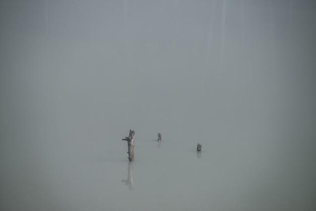 Fondo nebbioso atmosferico della natura con il gruppo di tronchi di alberi nella superficie dell'acqua del lago.