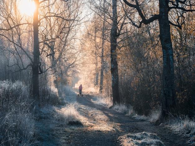 Atmosferico paesaggio invernale con un soleggiato sentiero nebbioso