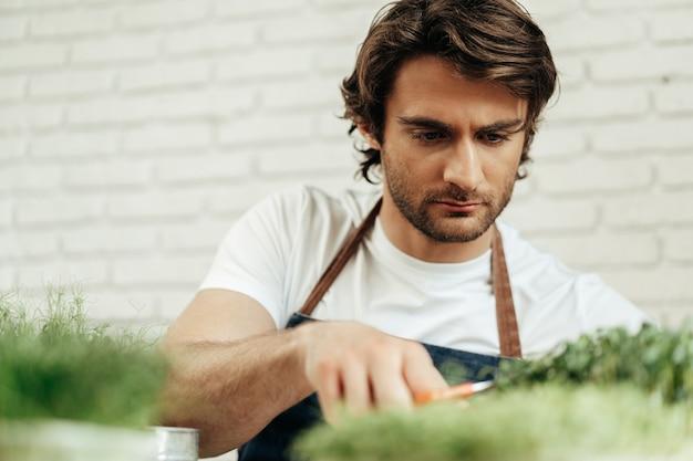 Coltivatore attraente dell'uomo barbuto che si prende cura dei germogli di microgreens al suo posto
