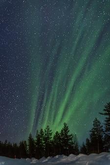 Aurora boreale verticalmente dietro gli alberi