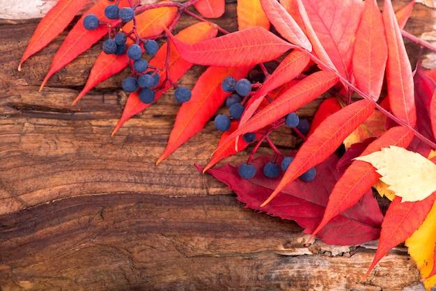 Sfondo autunno con foglie colorate su tavola di legno.