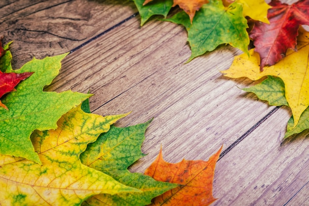 Fondo di autunno con le foglie di acero variopinte di caduta sulla tavola di legno rustica