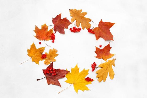Sfondo autunno con foglie su sfondo bianco.