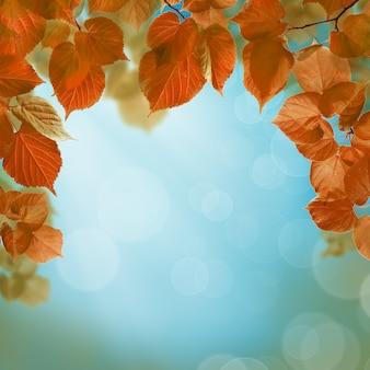 Sfondo autunno con foglie