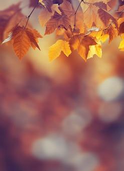 Sfondo autunnale con foglie d'acero
