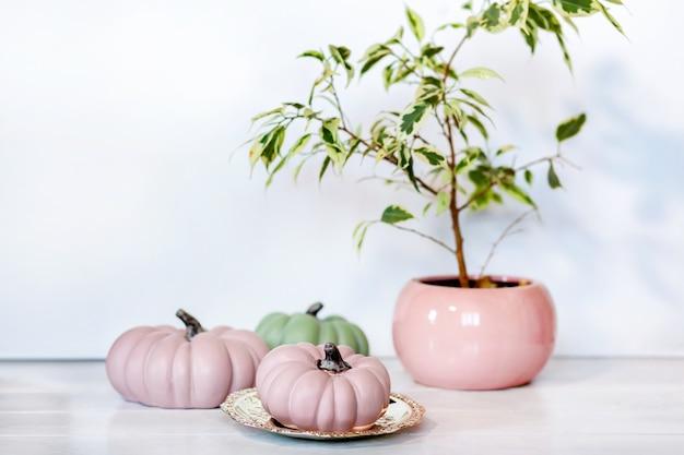 Sfondo autunnale con zucche rosa e verdi e ficus benjamina in vaso in tonalità pastello su sfondo chiaro