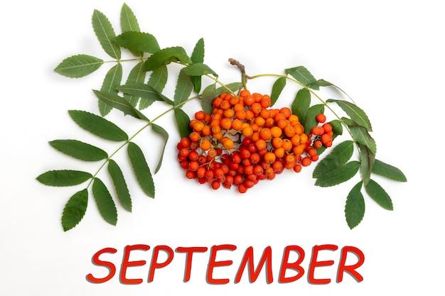 Bacche autunnali di una sorba rossa con foglie verdi e l'iscrizione settembre su sfondo bianco