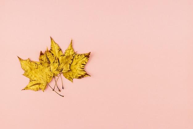 Autunno bouquet di foglie di acero dipinte d'oro su sfondo rosa. concetto alla moda. flay giaceva in stile minimalista.