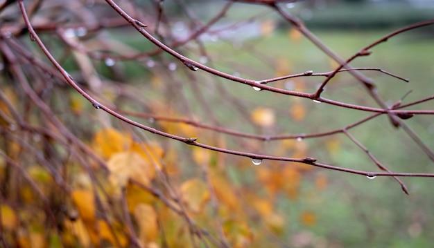 Rami autunnali con gocce concetto di autunno stagione autunnale foglie d'acero arancio su sfondo giorno di pioggia