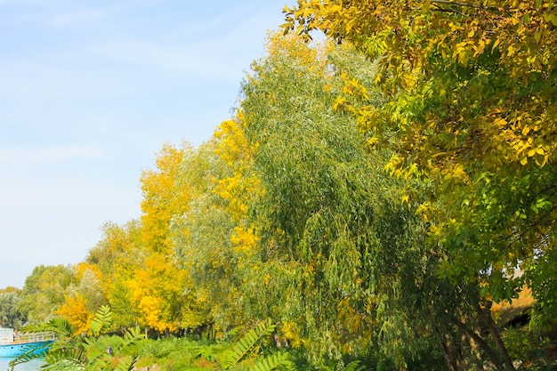 Foresta luminosa d'autunno