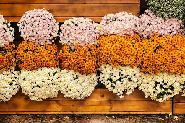 Festival del crisantemo autunnale giardinaggio verticale di una parete in legno con crisantemi negozio di fiori
