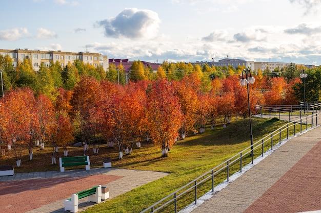 Paesaggio autunnale della città. rowan alberi rossi nel parco in una giornata di sole