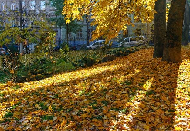 Parco cittadino autunnale con foglie gialle sotto gli alberi.