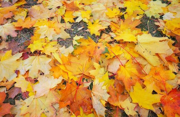 Autunno colorato arancione, rosso e giallo foglie d'acero come sfondo outdoor.