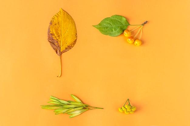 Composizione autunnale, cornice o layout da foglie secche gialle, bacche e fiore tanaceto su sfondo arancione. natura morta autunnale minimalista, elegante e creativa. lay piatto, copia spazio.