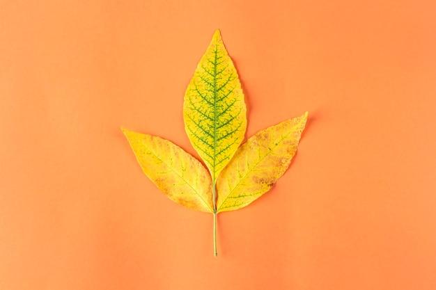 Composizione autunnale, layout da foglie secche gialle su sfondo arancione. natura morta autunnale minimalista, elegante e creativa. lay piatto, copia spazio.