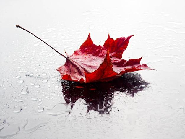 Composizione autunnale foglie su uno sfondo nero dopo la pioggia con gocce, copia dello spazio.
