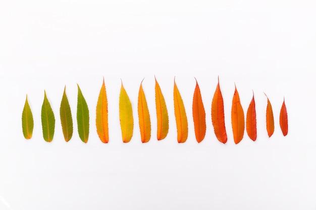 Composizione autunnale fatta di foglie secche multicolori autunnali su sfondo bianco. autunno, concetto di caduta. disposizione piana, vista dall'alto, copia spazio