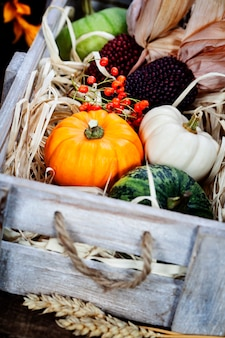 Composizione autunnale. zucche e mais sul vecchio tavolo in legno. concetto di giorno del ringraziamento