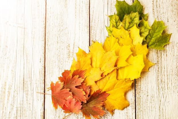 Composizione autunnale con foglie colorate di alberi diversi in un angolo del telaio su un bianco in legno
