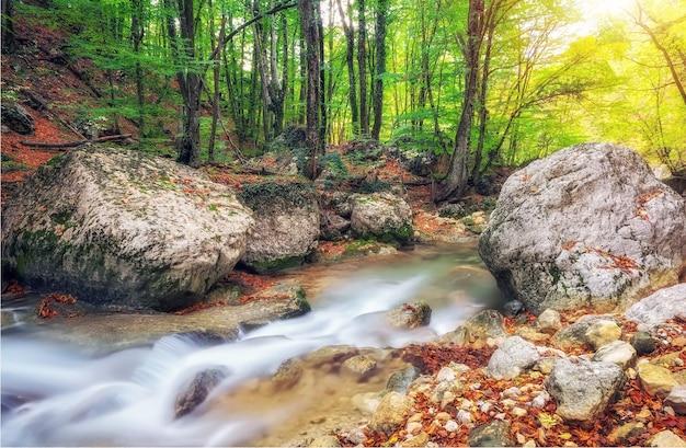 Bosco autunnale del torrente con fogliame di alberi gialli e rocce in montagna foresta