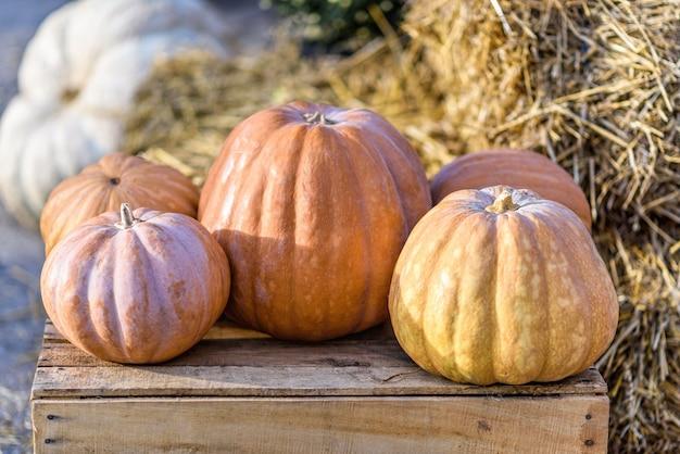 Decorazione di autunno con zucche su una scatola di legno e fieno alla raccolta