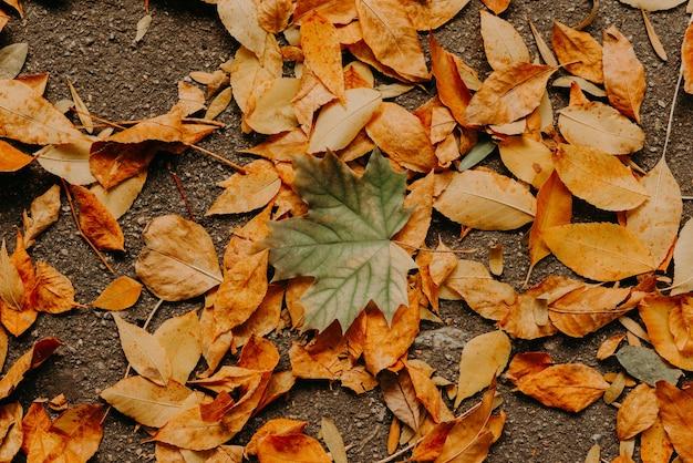 Fogliame arancione caduto asciutto di autunno sulla strada asfaltata dall'alto