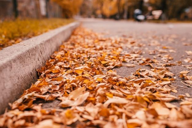 Fogliame arancione caduto asciutto di autunno sulla strada asfaltata