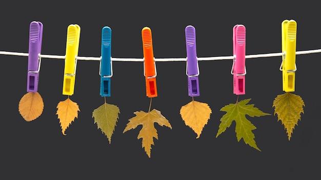 Le foglie secche autunnali sono appese a mollette colorate
