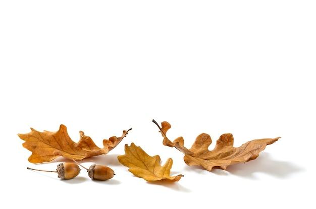 Foglie di quercia secca autunnale e ghiande isolate su sfondo bianco