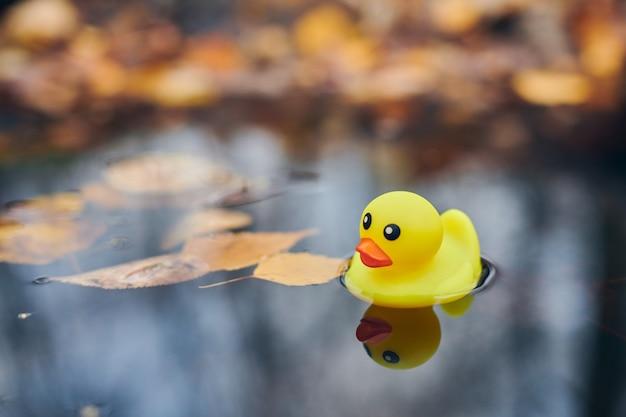 Giocattolo dell'anatra di autunno in una pozzanghera con foglie. simbolo autunnale del cambio delle stagioni. racconti di anatra nel parco cittadino. concetto di fairweather