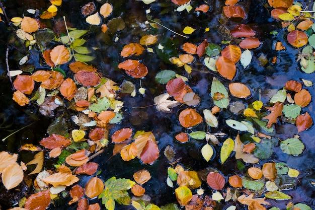 Autunno e caduta foglie colorate in acqua, ombre e luci, giallo, reg, arancio e verde sullo sfondo della natura, trakai, lituania.
